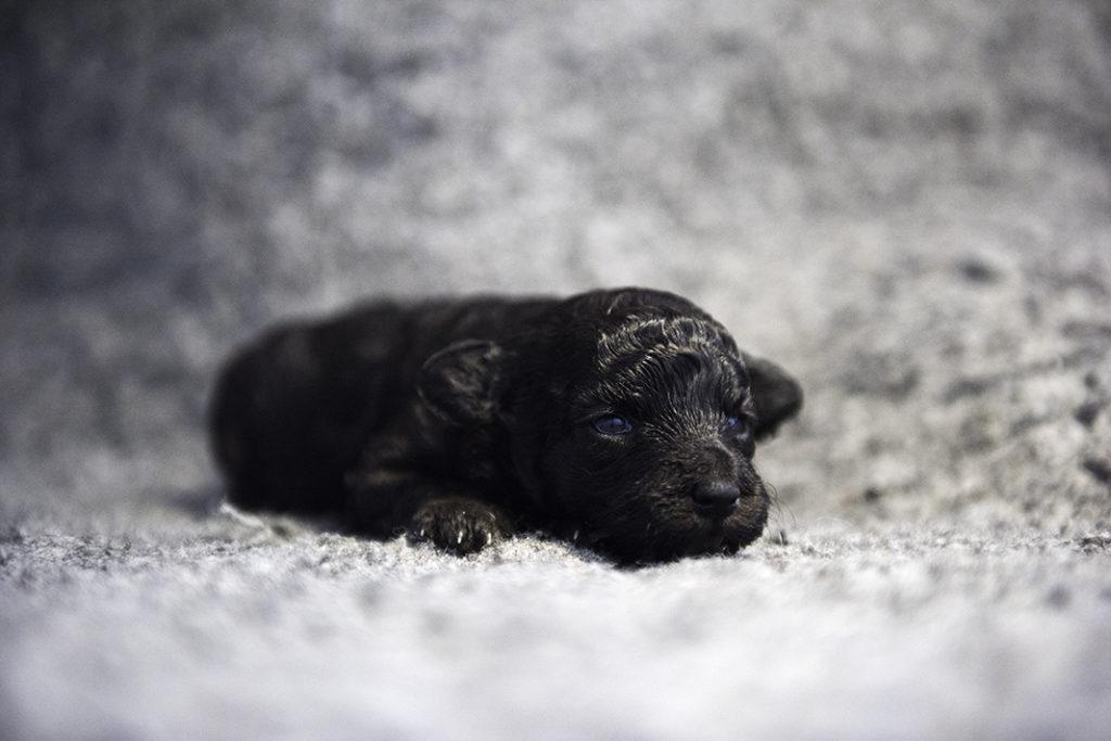 Grey girl, 2 weeks old