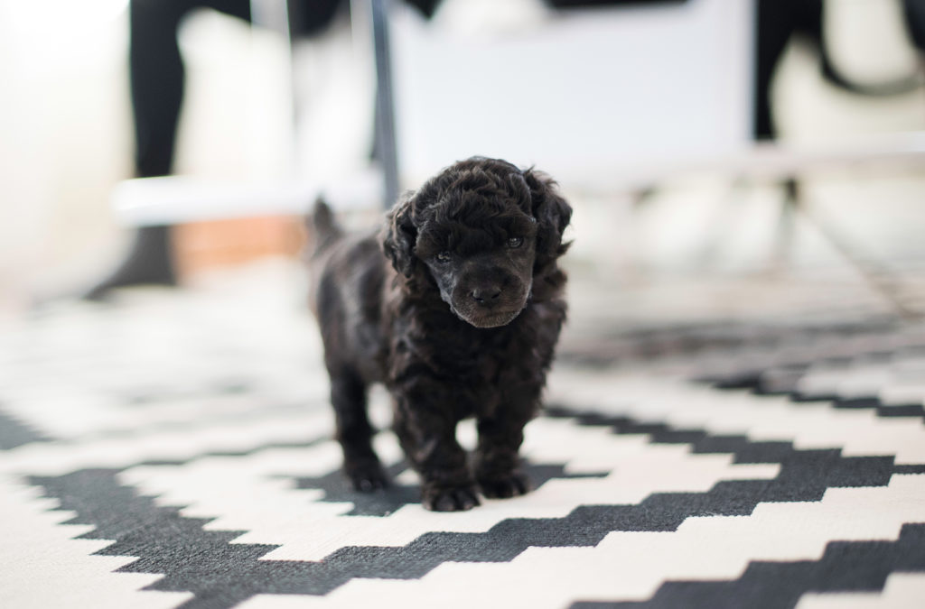 Tipzy 4 weeks.